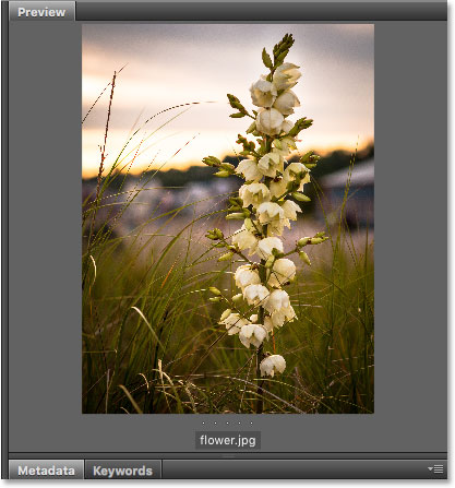 The Preview panel in Adobe Bridge. Image © 2016 Steve Patterson, Photoshop Essentials.com