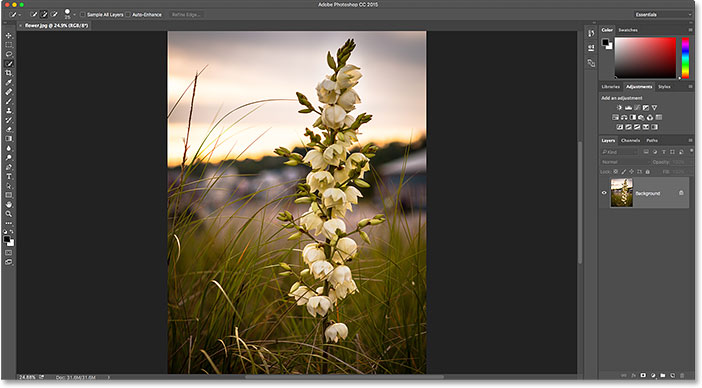 The image is now open in Photoshop. Image © 2016 Steve Patterson, Photoshop Essentials.com