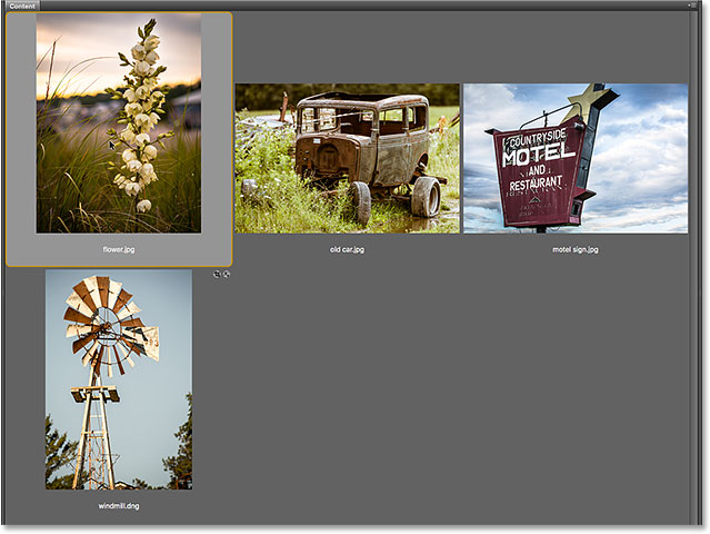 Selecting an image in the Content panel in Adobe Bridge. Image © 2016 Steve Patterson, Photoshop Essentials.com