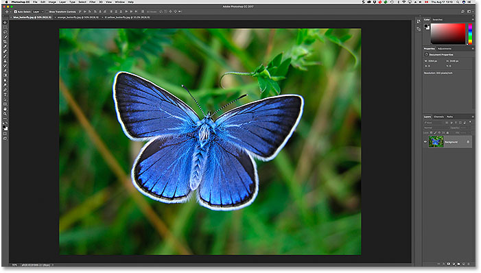 Viewing a different open image after clicking its tab in Photoshop. Image licensed from Adobe Stock