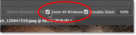 The Zoom All Windows option for the Zoom Tool in Photoshop