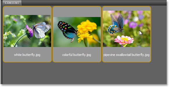 Selecting three images to open in Adobe Bridge. Image © 2013 Steve Patterson, Photoshop Essentials.com