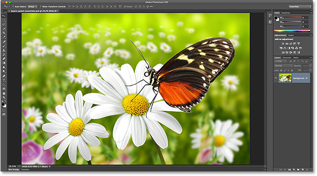 A photo of a butterfly. Image # 27824157 licensed from Adobe Stock by Photoshop Essentials.com