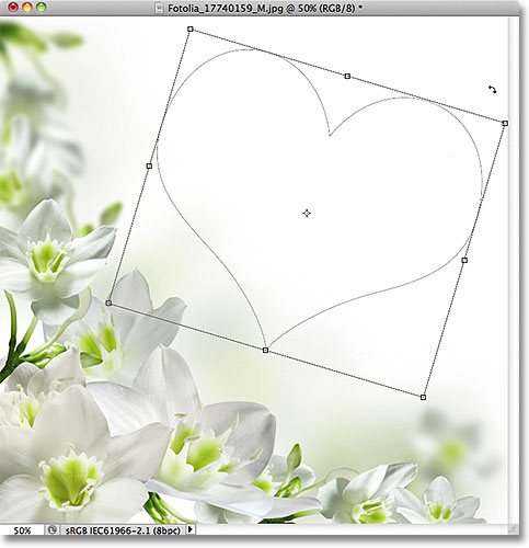 Rotating a shape with the Free Transform Path command in Photoshop. Image © 2011 Photoshop Essentials.com