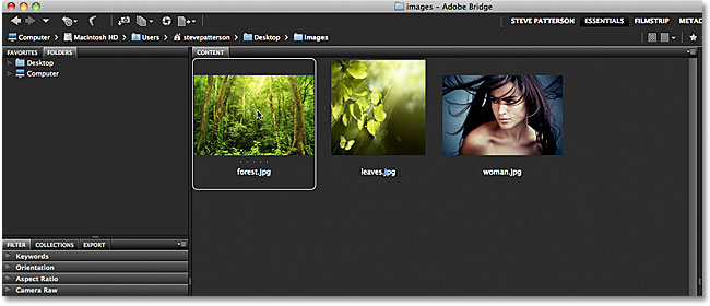 Selecting a single image in Adobe Bridge. Image &copy; 2011 Photoshop Essentials.com