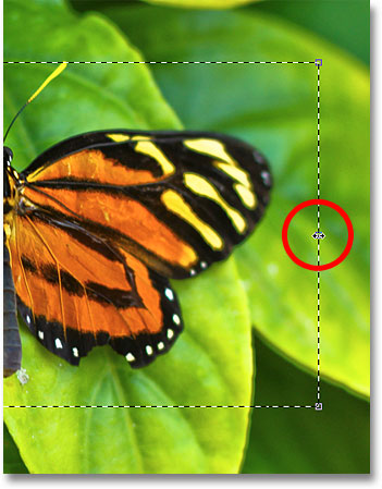 Dragging the right Transform Selection handle. Image © 2010 Photoshop Essentials.com