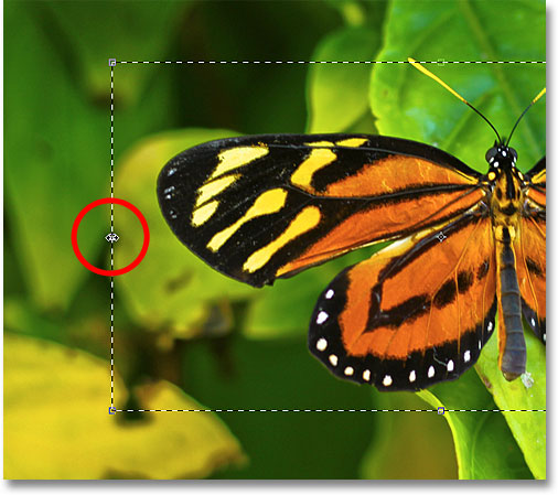 Dragging the left Transform Selection handle. Image © 2010 Photoshop Essentials.com