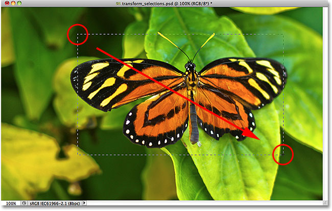 Drawing a rectangular selection around the butterfly. Image © 2010 Photoshop Essentials.com