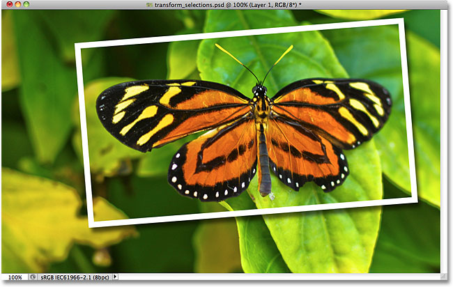 The Stroke and Drop Shadow layer styles appied to the selected area. Image © 2010 Photoshop Essentials.com