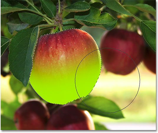 Painting along the bottom half of the apple. Image © 2009 Photoshop Essentials.com
