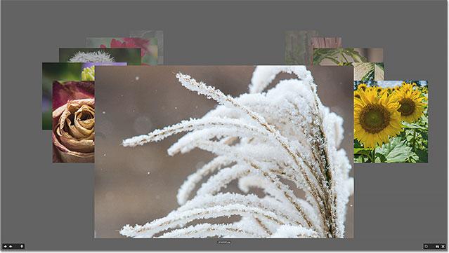 Comparing images in Review Mode in Adobe Bridge. Image © 2015 Photoshop Essentials.com