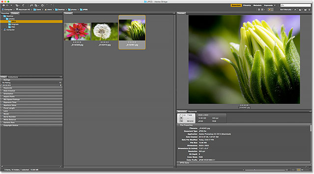Only images with a five star rating remain in the Content panel. Image © 2015 Photoshop Essentials.com