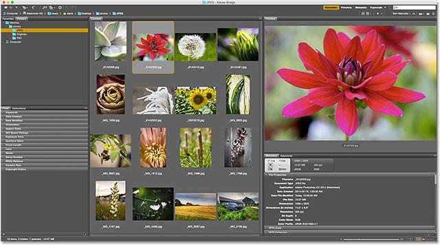 Adobe Bridge. Image © 2015 Photoshop Essentials.com