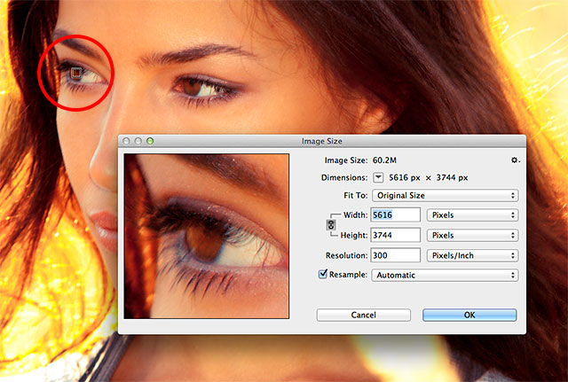 Clicking on the image to select the preview area. Image © 2013 Photoshop Essentials