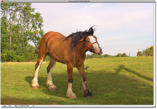 A photo of a horse. Image &copy; 2009 Steve Patterson.