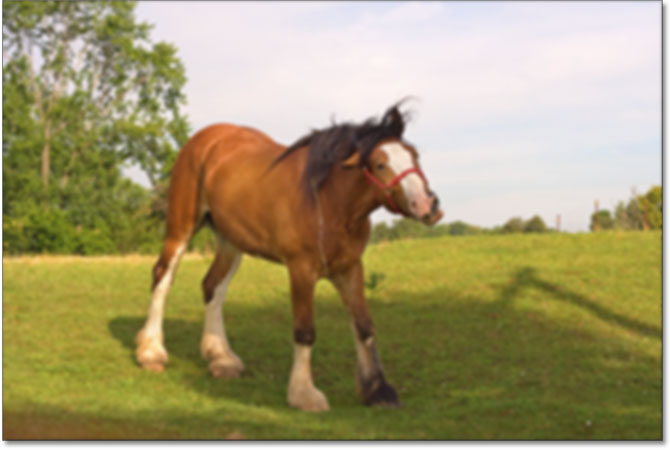 The horse photo as it may appear printed in low resolution. Image © 2009 Steve Patterson.