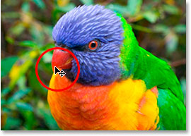 Hovering the mouse over the bird's beak