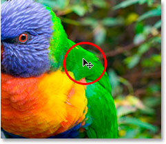 Hovering the mouse over an area on the bird's back