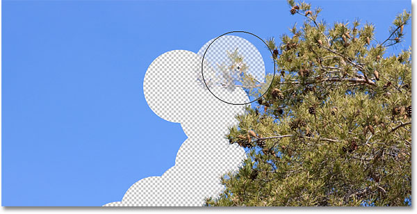 An example of the Background Eraser in Photoshop. Image © 2010 Photoshop Essentials.com