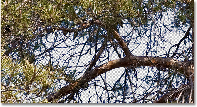Blue fringes still appear around some of the tree branches. Image &copy; 2010 Photoshop Essentials.com