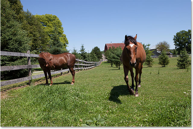 A photo of two horses, with the horse on the left looking away. Image © 2015 Steve Patterson, Photoshop Essentials.com