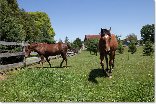 A second photo of the same horses, with a better view of the horse on the left. Image © 2015 Photoshop Essentials.com