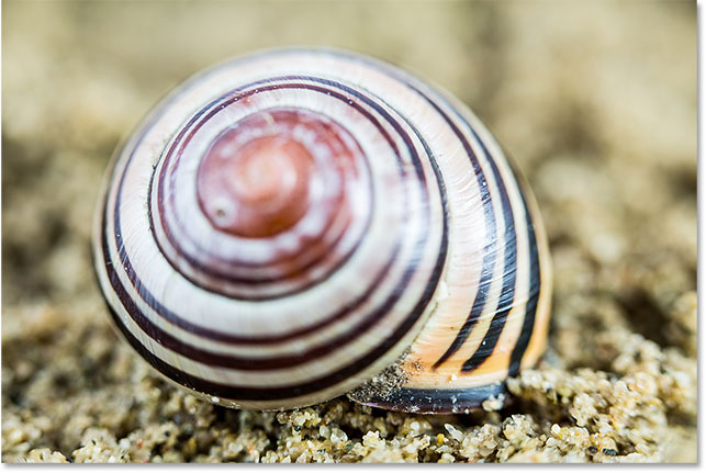 A shot from the middle of the focus stacking series, with only the mid-point of the shell in focus.