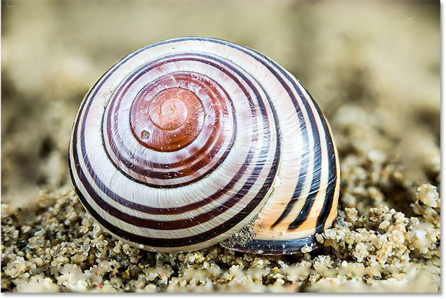 The shell is now completely in focus after stacking the images.