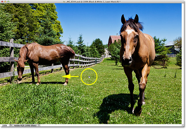 Clicking and dragging to darken the grass and trees in the photo. Image © 2012 Photoshop Essentials.com