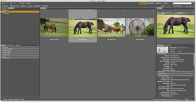 Selecting an image in Adobe Bridge CS6. Image © 2013 Steve Patterson, Photoshop Essentials.com