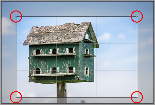 The crop box is now set to a 4x6 aspect ratio. Image © 2013 Steve Patterson, Photoshop Essentials.com
