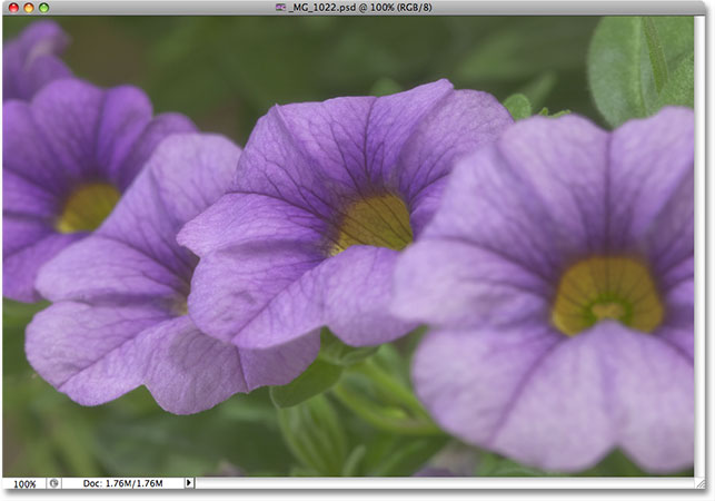 A photo of purple and yellow flowers. Image © 2009 Steve Patterson, Photoshop Essentials.com.