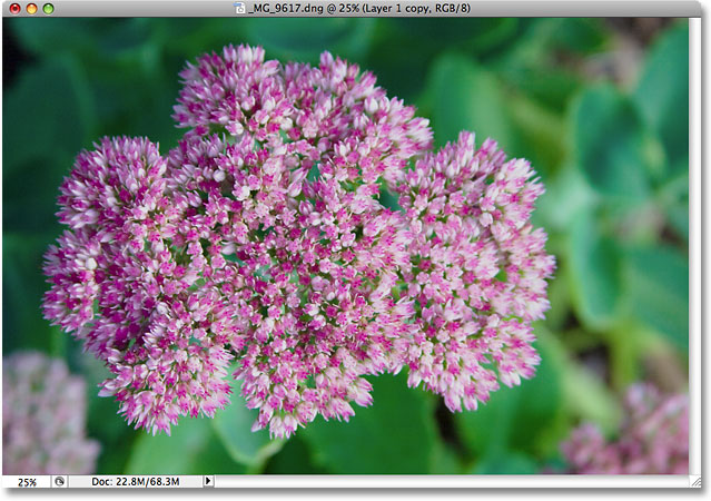 The photo of the flower is now even brighter. Image © 2009 Photoshop Essentials.com.