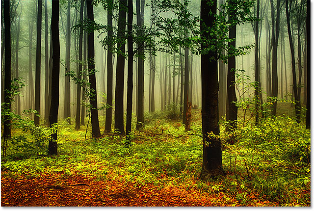 A photo of an autumn forest. Image licensed from Shutterstock by Photoshop Essentials.com