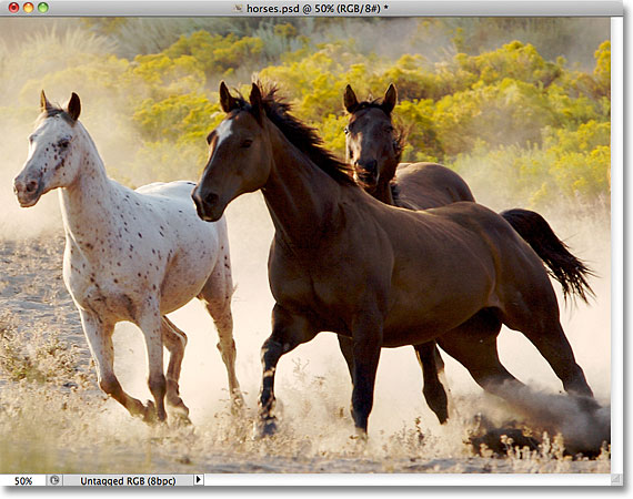 A photo of horses. Image licensed from Folotia by Photoshop Essentials.com.