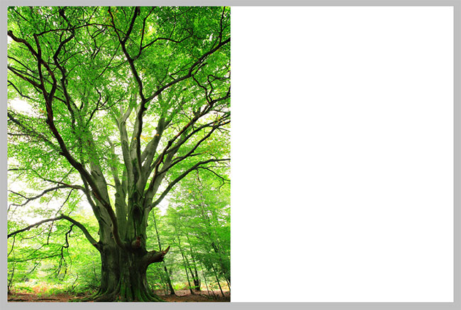 Extra canvas space now appears on the right side of the photo. Image © 2010 Photoshop Essentials.com.