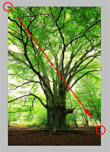 Cropping an image in Photoshop. Image © 2010 Photoshop Essentials.com.