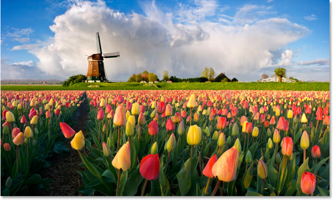A photo of a Dutch windmill and flowers.
