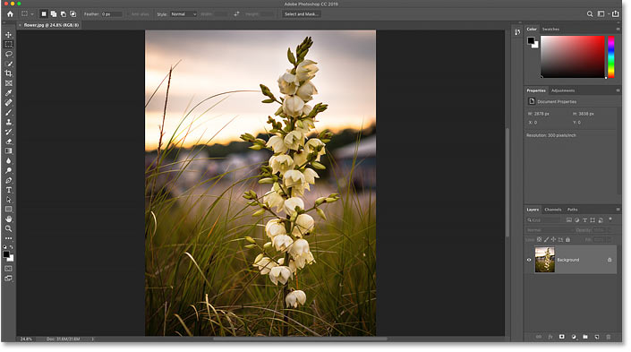 The image opens in Photoshop. Photo credit: Steve Patterson