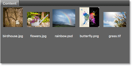 The Content panel displays thumbnails of your images.