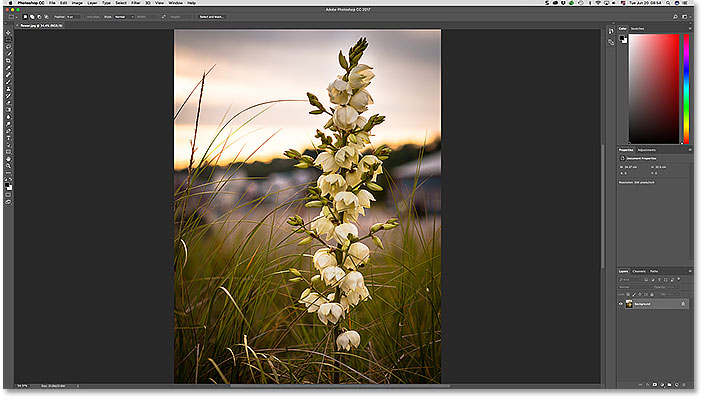 The image opens in Photoshop.