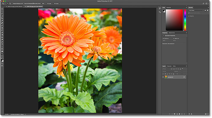 The second image opens in Photoshop. Image © 2016 Steve Patterson, Photoshop Essentials.com