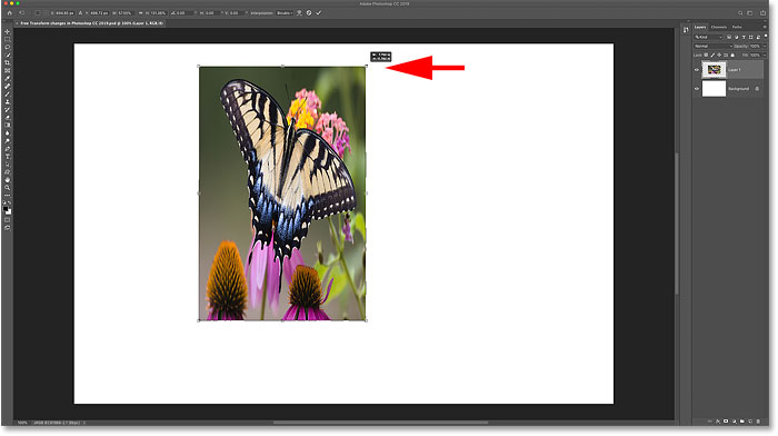Free Transform in Photoshop CC 2019 - New Features and Changes