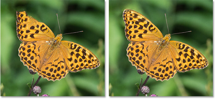 The butterfly wing is repaired using Content-Aware Fill's Mirror option in Photoshop