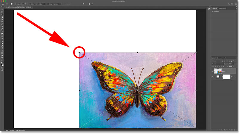 Scaling the image smaller with Free Transform now reveals the fill layer behind it.
