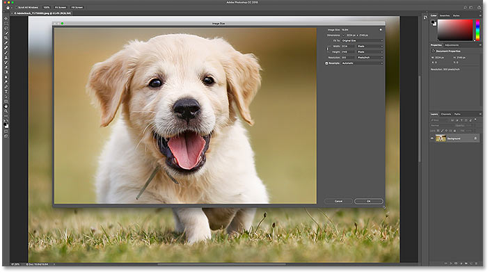 How to resize the Image Size dialog box for a larger image preview in Photoshop