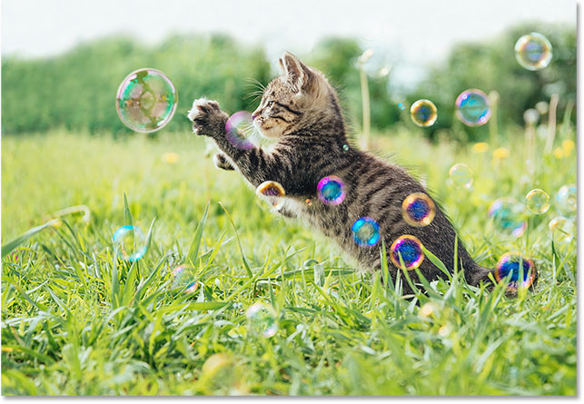 Kitten playing with soap bubbles. Image 107245184 licensed from Adobe Stock