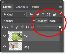 Increasing the Opacity value back to 100%.