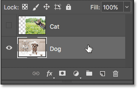 Selecting the Dog layer in the Layers panel.