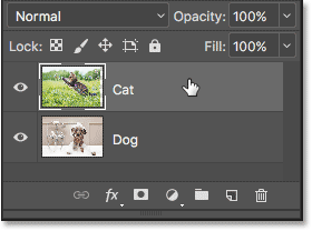 Selecting the Cat layer in the Layers panel.
